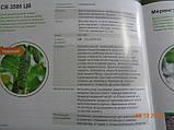 SV 3506 CV F1 10 шт семена огурца SEMINIS Голландия, фото 4