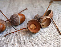 """Шляпки желудей """"с хвостиком"""" дуба обычного (материал для рукоделия, упаковка 30 штук), фото 1"""