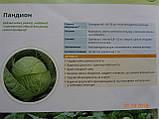 Пандіон F1 10 шт насіння капусти SEMINIS Голландія, фото 2