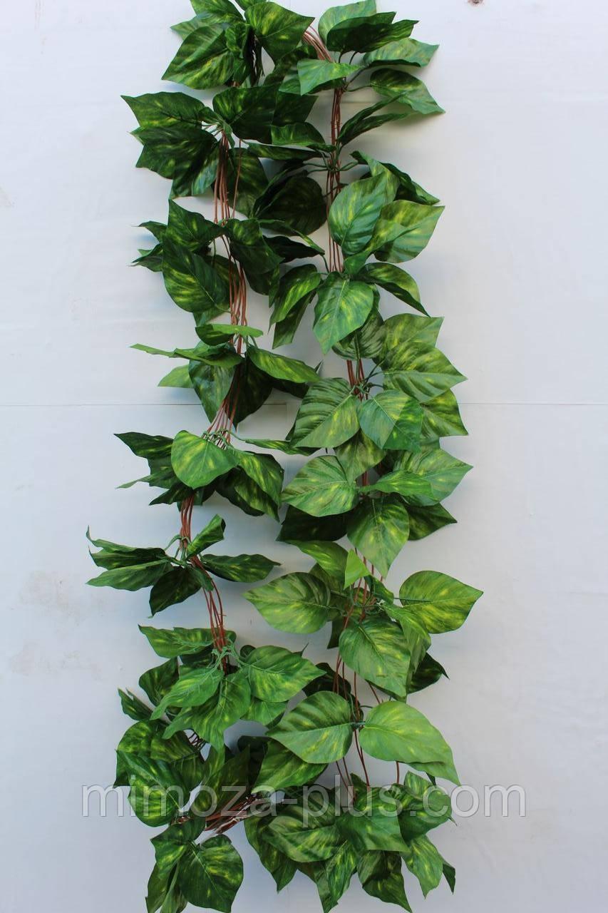zelen-buketi-liani