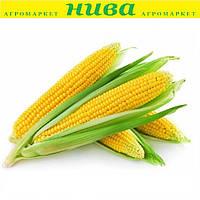 Алойзія F1 насіння кукурудзи солодкої Semo 1 000 г