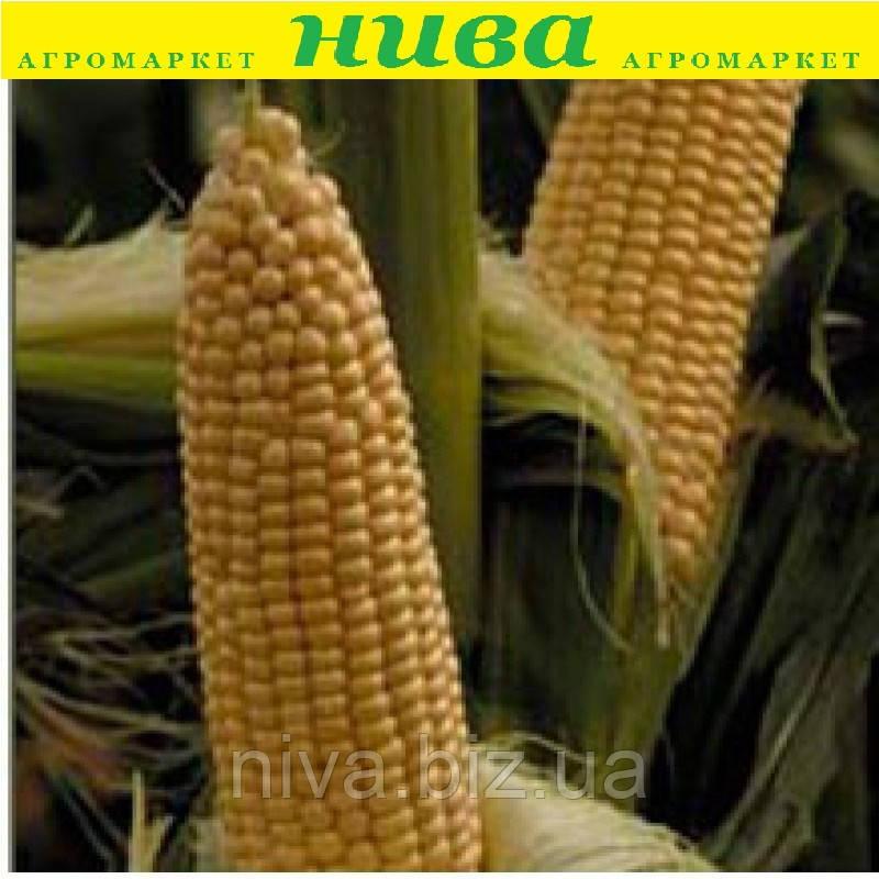 Вєга F1 насіння кукурудзи суперсолодкої May Seeds 500 г