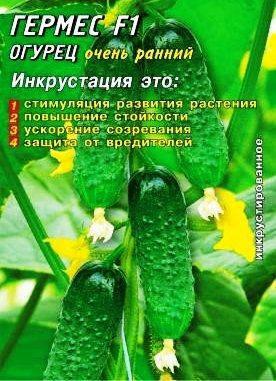Семена огурцов пчелоопыляемых Гермес F1 25 шт. Инк., фото 2