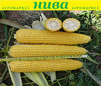 Добриня F1 насіння кукурудзи солодкої Lark Seeds 100 насінин