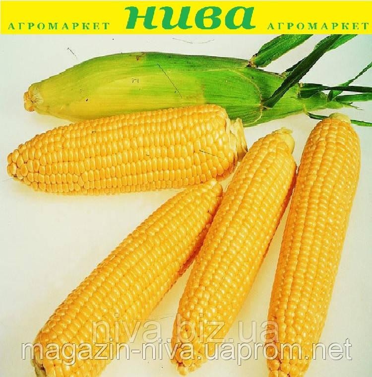 Леженд F1 насіння кукурудзи Clause 1 000 г