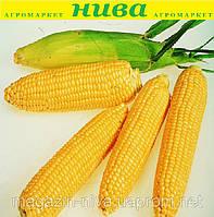 Леженд F1 насіння кукурудзи Садиба Clause 20 насінин