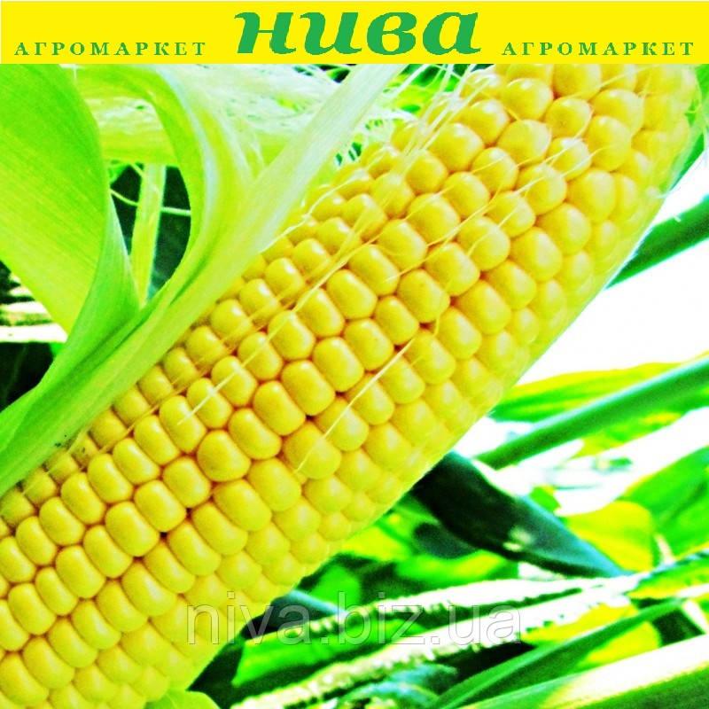 ЛС 889 F1 (LS 889 F1) насіння кукурудзи суперсолодкої Lucky Seed 250 г