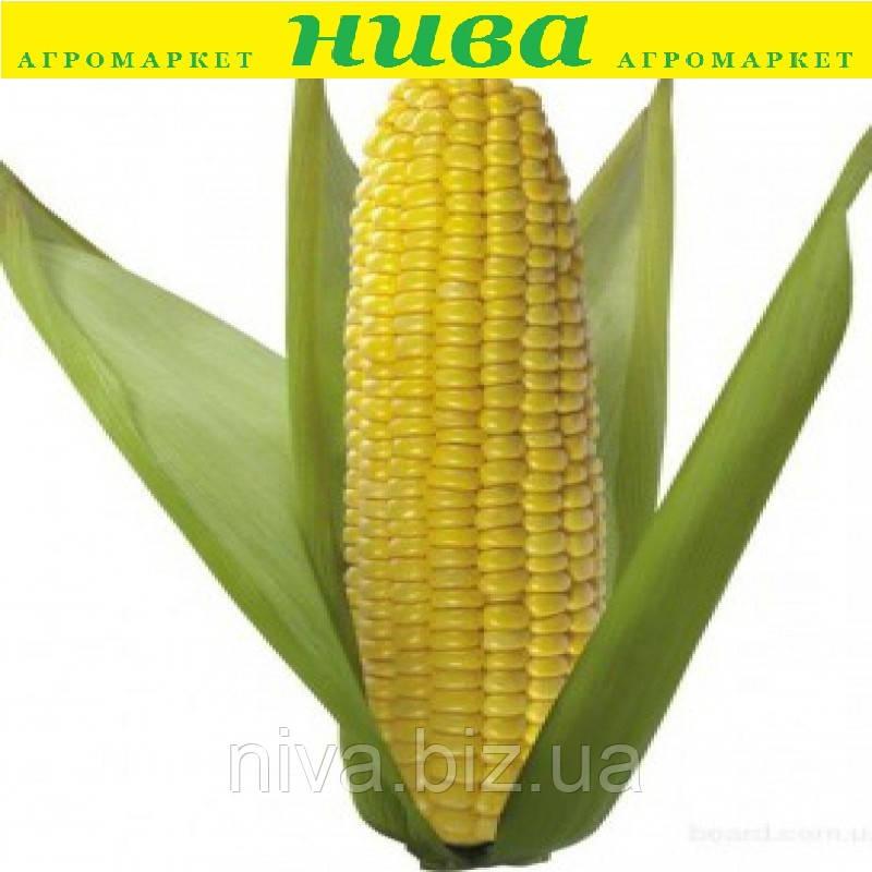 Лібертон F1 насіння кукурудзи солодкої Agri Saaten 5 000 насінин