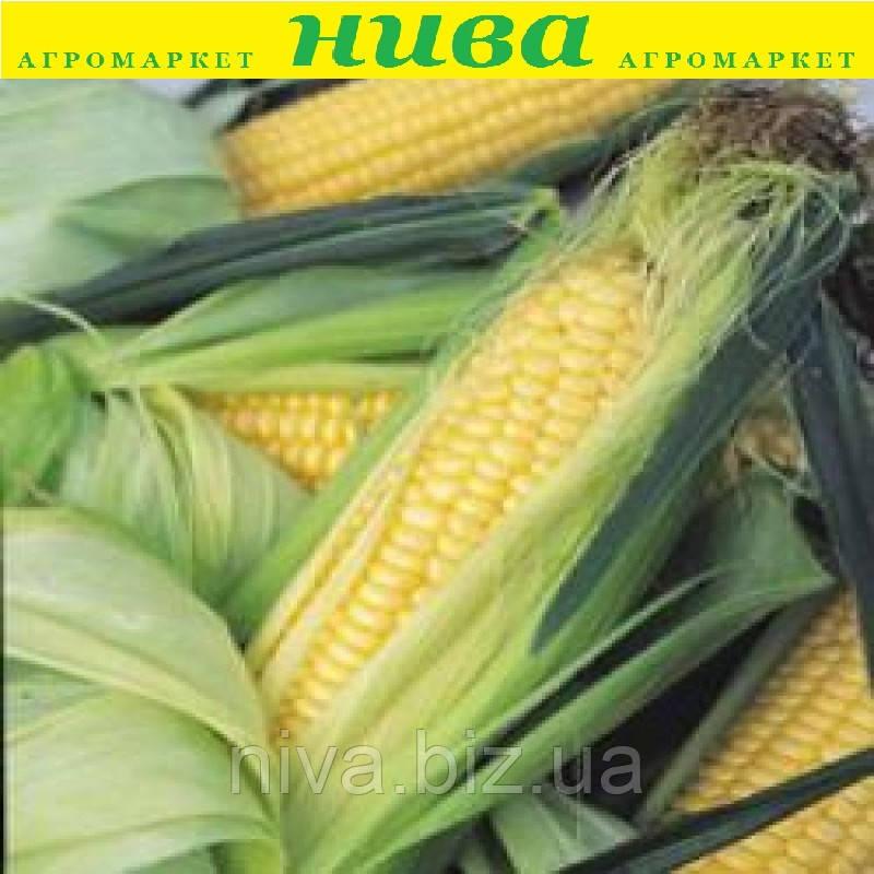 Перфекта F1 насіння кукурудзи солодкої Mоravoseed 500 г
