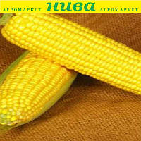 Світ Вондер F1 насіння кукурудзи солодкої Agri Saaten 5 000 насінин