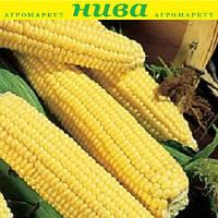 Світ Нагет F1 насіння кукурудзи солодкої Agri Saaten 5 000 насінин