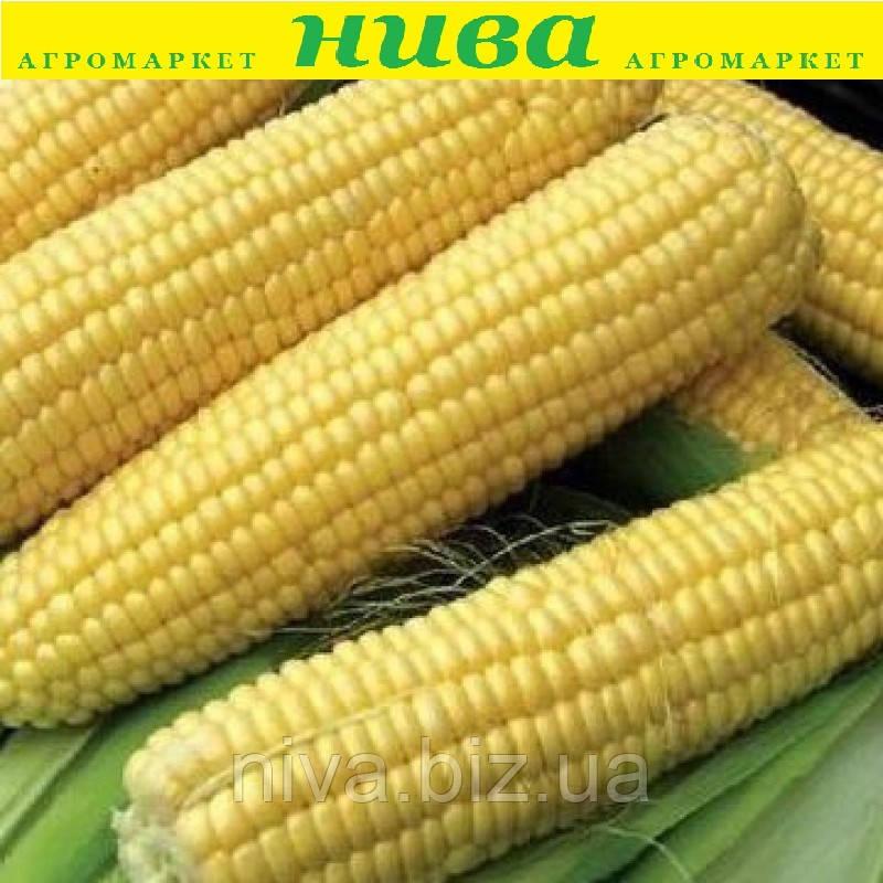 Світстар F1 насіння кукурудзи суперсолодкої Syngenta 100 000 насінин