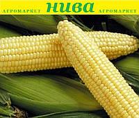 Спіріт F1 насіння кукурудзи Syngenta 100 г