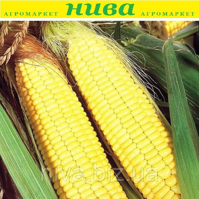 Трофі F1 (Trophy F1) насіння кукурудзи солодкої Seminis 5 000 насінин
