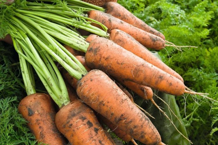 Кордоба F1 - семена моркови, Bejo - 100 000 семян 1.6-1.8