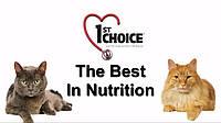 1st Choice for Cat's - Коротко оглавном