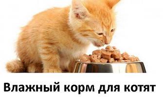 Влажный корм и консервы для котят