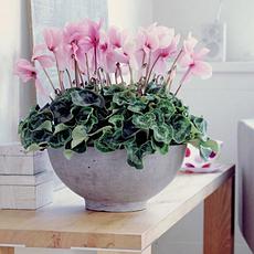 Живые цветы и растения