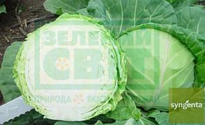 КЕВИН F1 / KEVIN F1, 20 семян — капуста белокочанная, Syngenta, фото 2