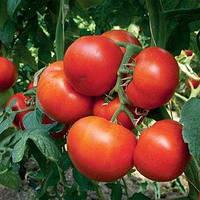 Семена томата Панекра F1 (500 сем.)