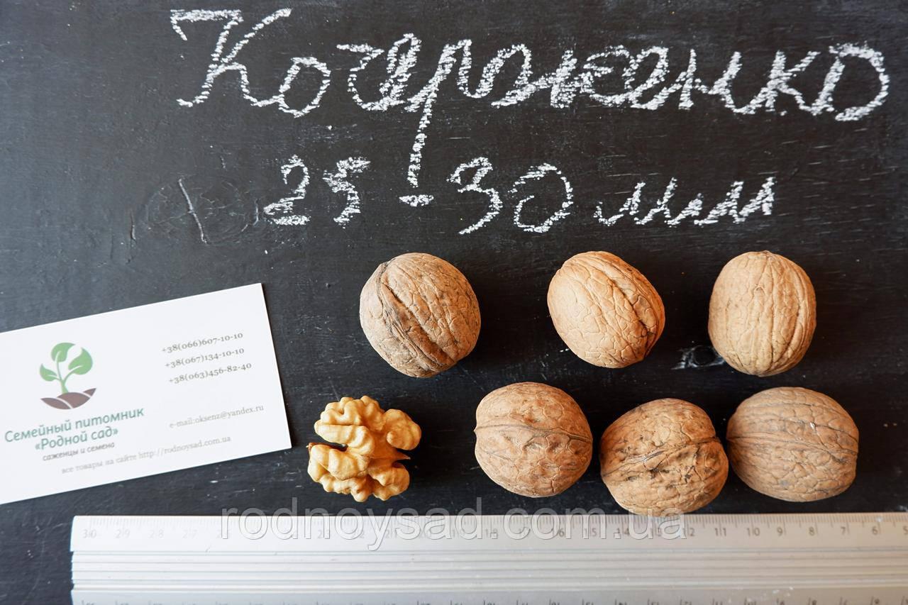 """Семена грецкий орех сорт """"Кочерженко""""(10 штук калибр 25-30 мм)  саженцы, насіння волоський горіх на саджанці"""