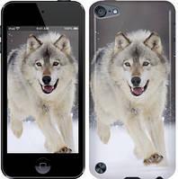 "Чехол на iPod Touch 5 Бегущий волк ""826c-35-328"""