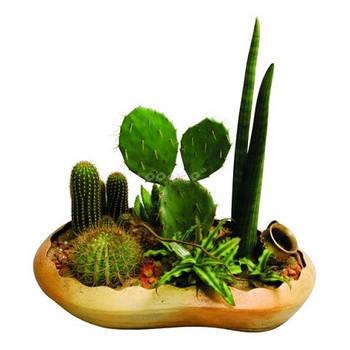 Суккуленты, кактусы искусственные