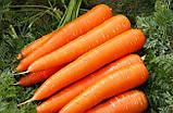 Семена, морковь поздняя ОСЕННЯЯ КОРОЛЕВА (ТМ SATIMEX, Германия) банка 500 грамм, фото 2