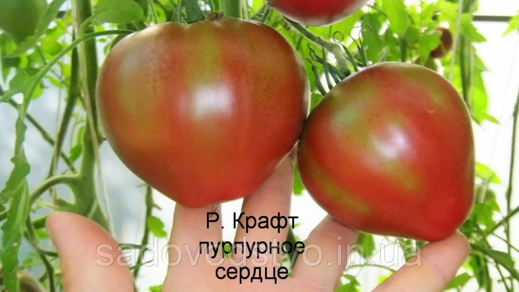 Томат Пурпурное сердце