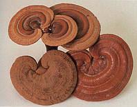Полисахариды грибов. Что это?
