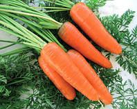 Семена моркови Эмперор F1, Hazera 100 000 семян | профессиональные