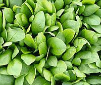 Шпинат гибридный сорт Спирос F1 Для выращивания круглый год, для вакуумной упаковки, семена Bejo 50 000 семян, фото 1
