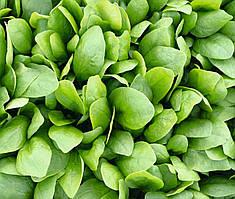 Семена шпината Спирос F1, Bejo 50 000 семян | профессиональные