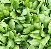 Рембрандт F1 - семена шпината, Bejo - 50 000 семян