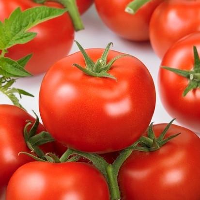 Насіння томату Ронда F1 (100 сем.) Ergon