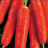 """Морковь """"Нантская"""", опт 20 пакетов"""