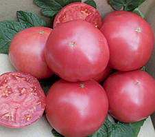 Семена томата  СИМ-СИМ (EZ 777) F1 250 сем Erste