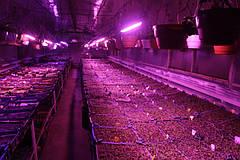 Недорогие фитолампы своими руками: способ повысить урожайность