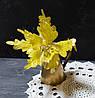 Цветок пуансетии бархатной желто-золотой