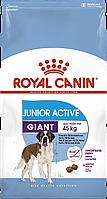 Royal Canin Giant Junior Activ(РоялКанин ДжеанЮниорАктив)сухой корм для активных щенков гигантских пород 15 кг