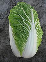 Универсальный среднеранний гибрид пекинской капусты Пасифико F1 Bejo, Семена почтой проф упаковка 2 500 семян