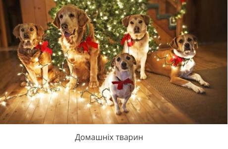 Подарунки для домашніх тварин