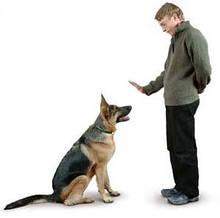 Тренування собак.