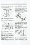 Обрізування рослин. Брікелл Крістофер, фото 8