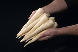 Семена корневой петрушки Игл, Bejo 50 грамм   профессиональные