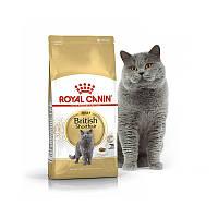Royal Canin British Shorthair Adult (для взрослых британских котов)