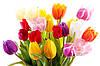 Живые тюльпаны с доставкой