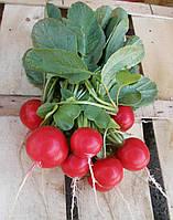 Семена редиса Розетта F1, Bejo 50 000 семян (2.25-2.50)   профессиональные