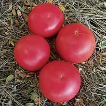 Насіння томату Фенда F1 (250 сем.) Clause