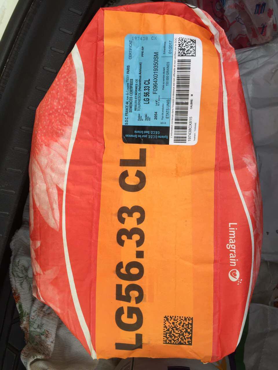 ЛГ 5633 CL Limagrain (Евро-Лайтнинг), семена подсолнечника LG 5633 CL Лимагрейн